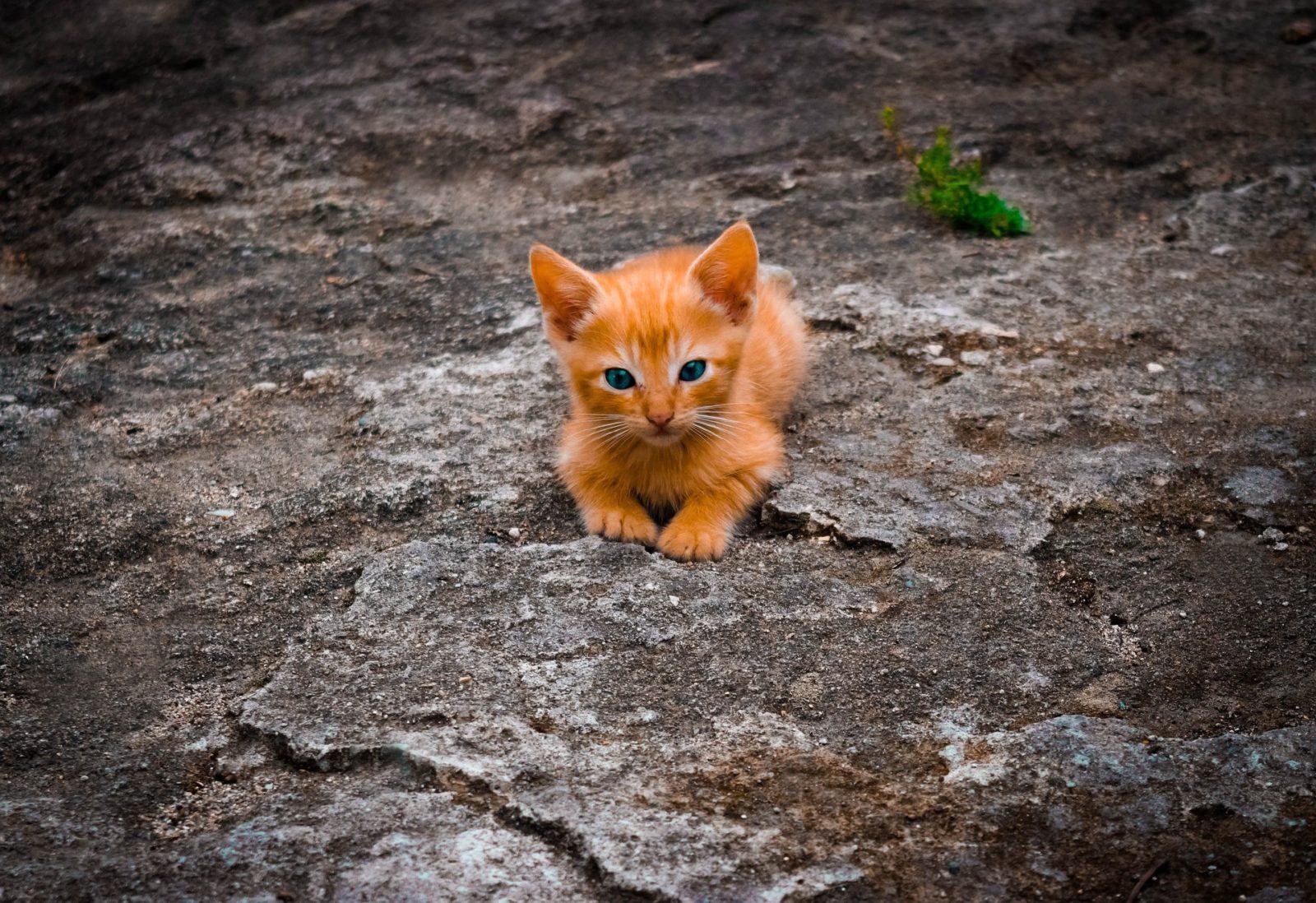 Cosa dare al gatto per il vomito?