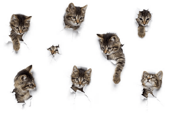 come ridurre il grasso cat