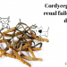 Cordyceps Chronic renal failure cat