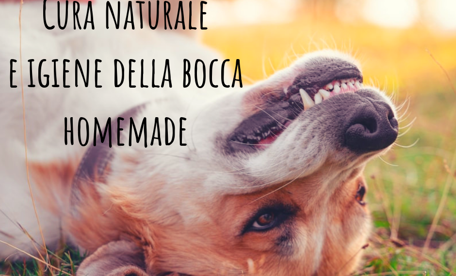 Dentifricio cane fatto in casa