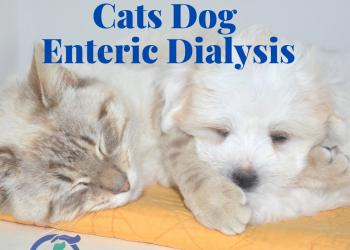 Enteric Dialysis Cat Dog