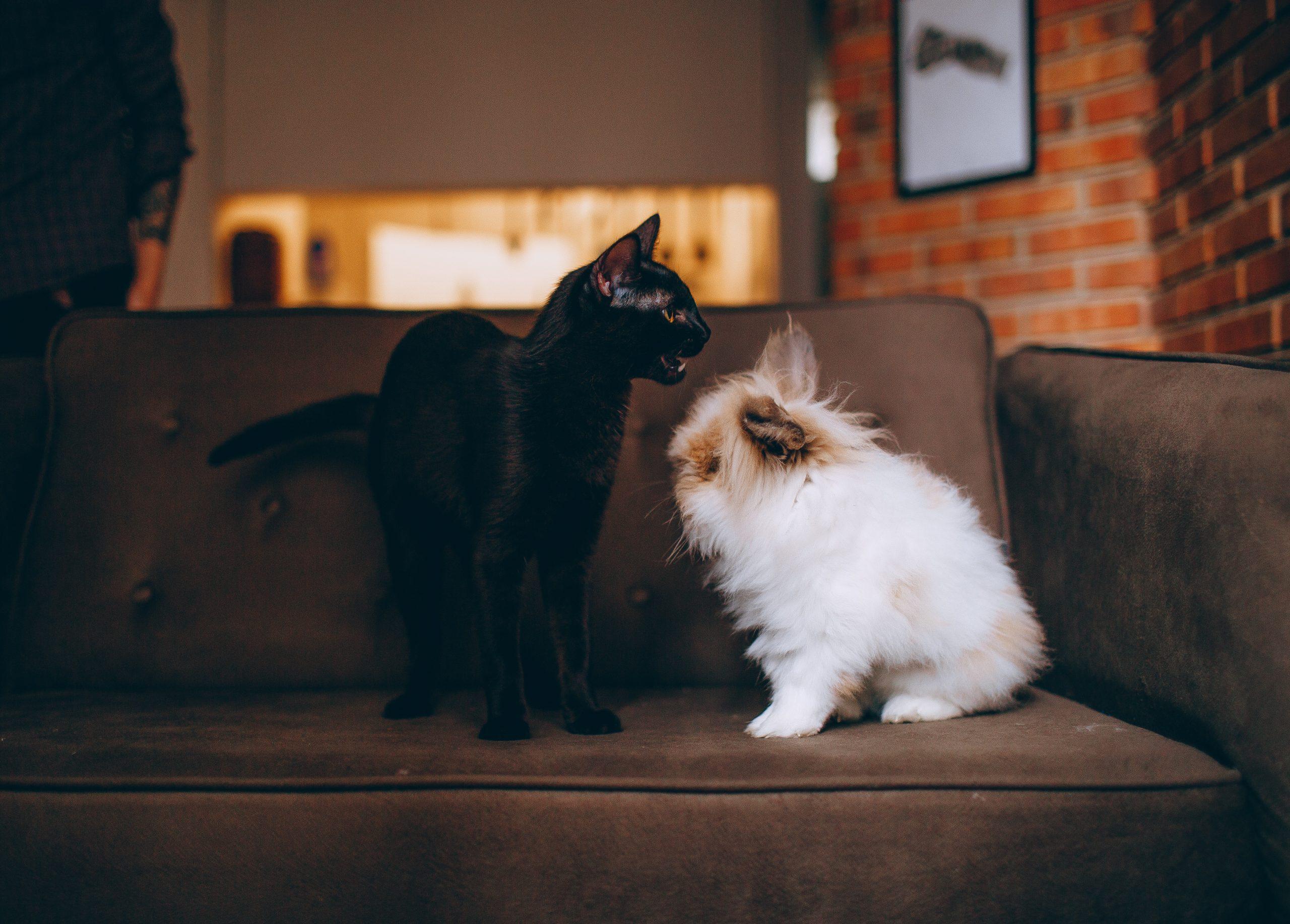 Rimedi Naturali Insufficienza renale cane gatto