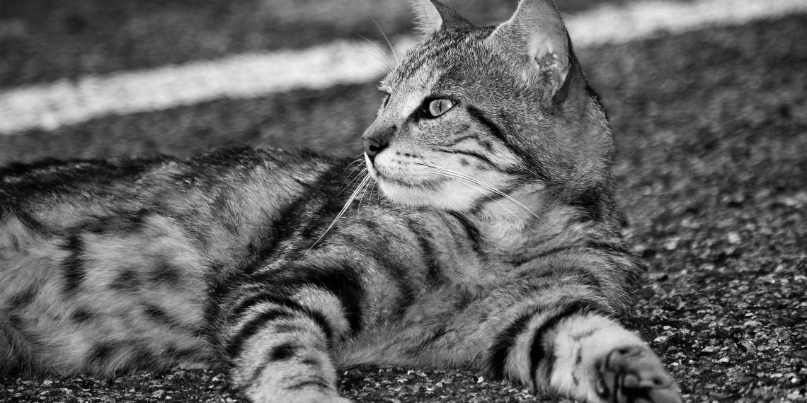 Cosa bisogna fare quando il gatto vomita?