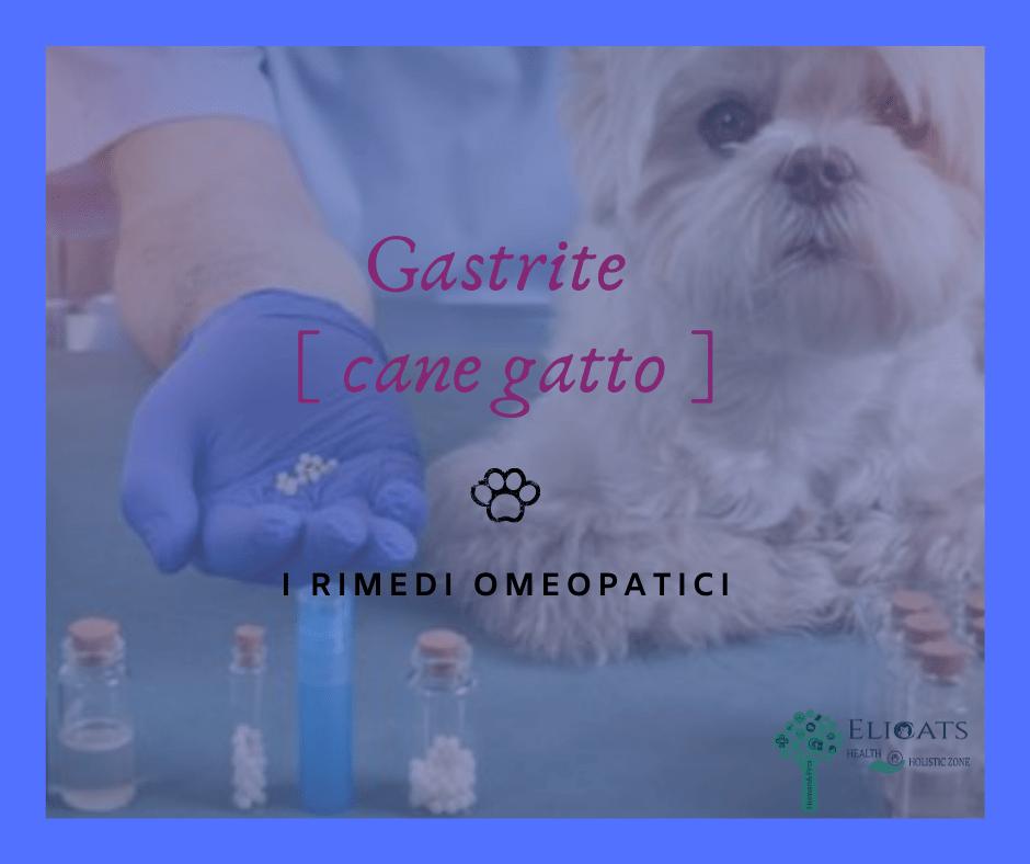 gastrite cane rimedio omeopatico