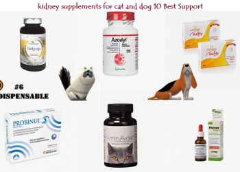 kidney supplements for cat and dog