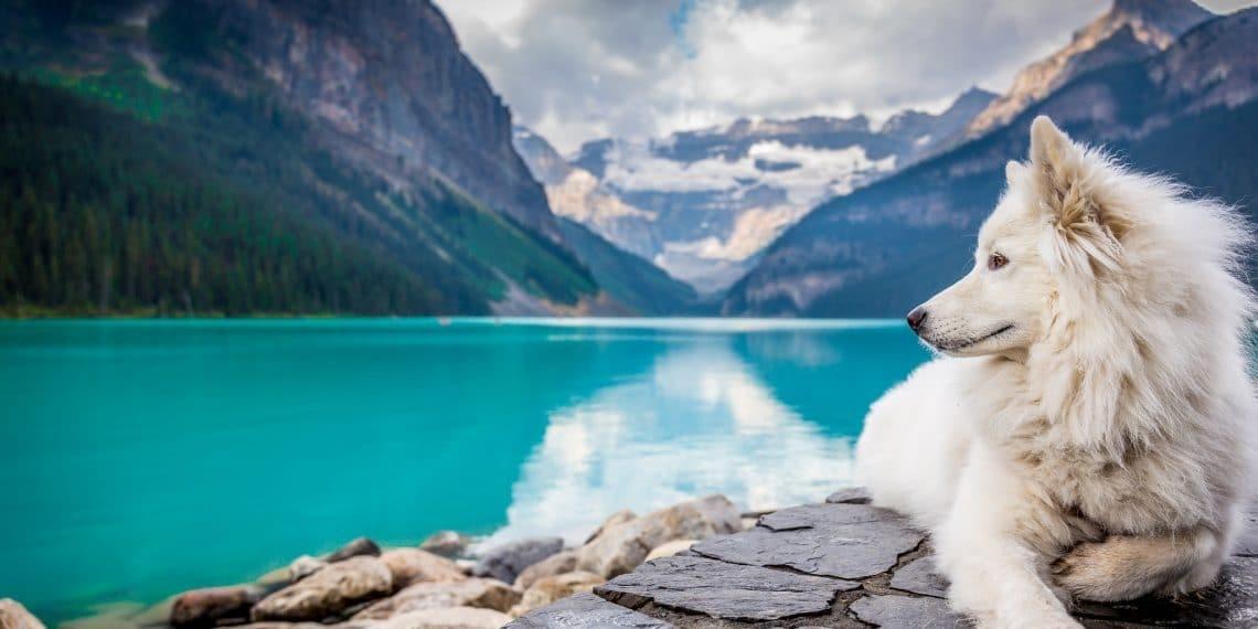 Fermenti lattici per cani e gatti dopo Antibiotici
