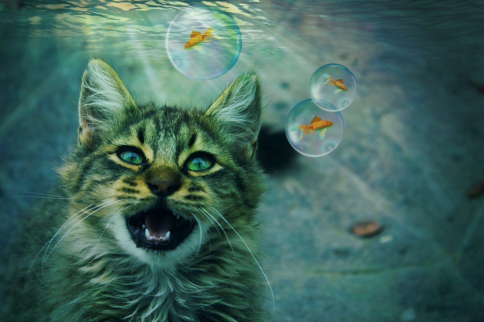 insufficienza renale gatto esami sangue