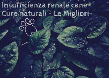 Insufficienza renale cane cure naturali