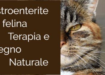 Gastroenterite felina Panleucopenia Terapia