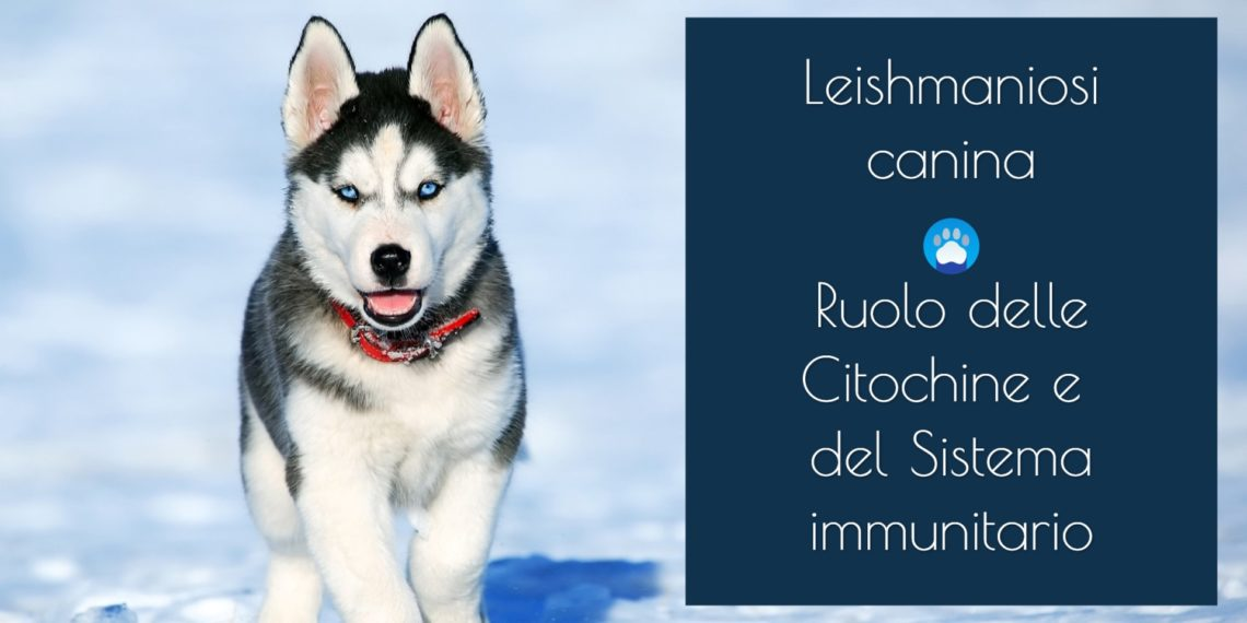 Leishmaniosi cane si può guarire