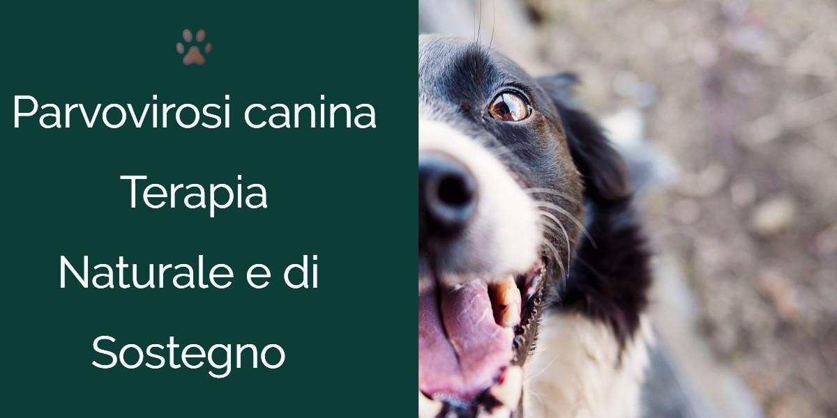 Parvovirosi canina terapia