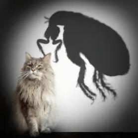 Come eliminare le pulci dei gatti in casa