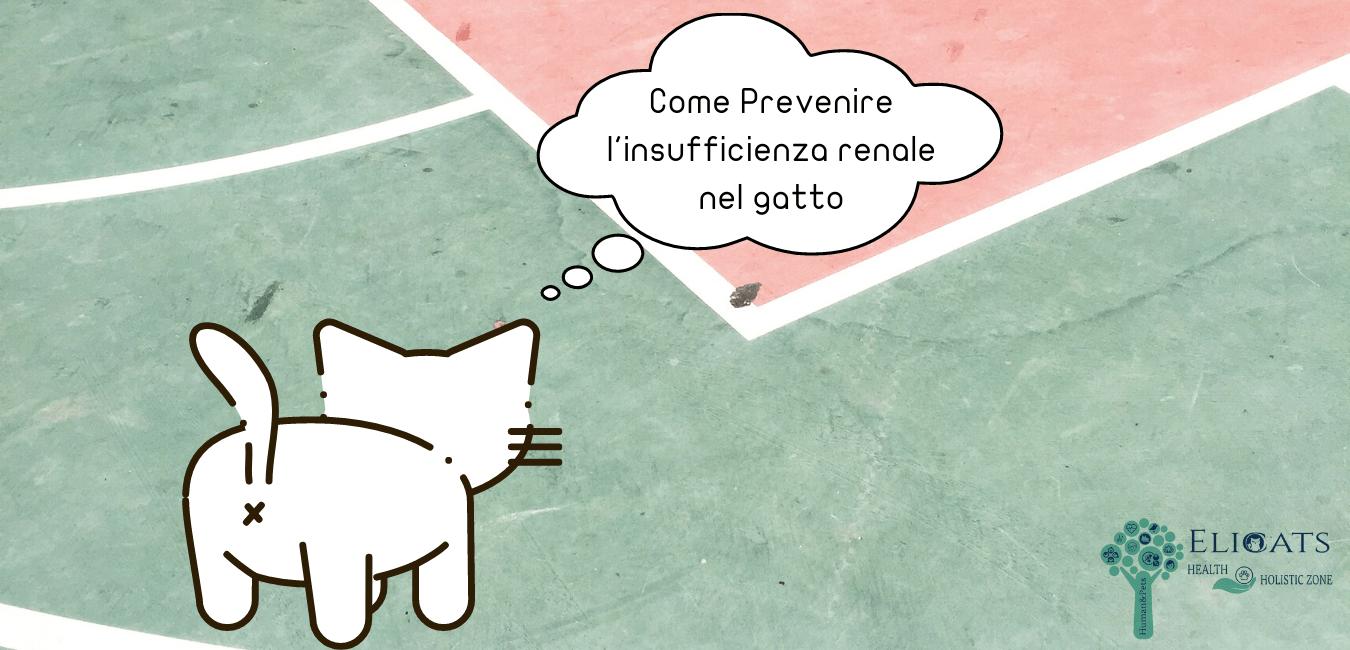 Come Prevenire l'insufficienza renale nel gatto
