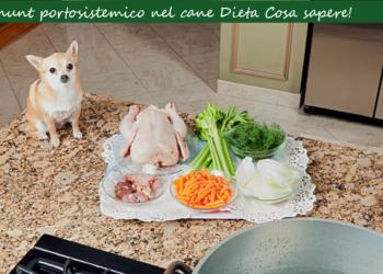Shunt portosistemico cane Dieta