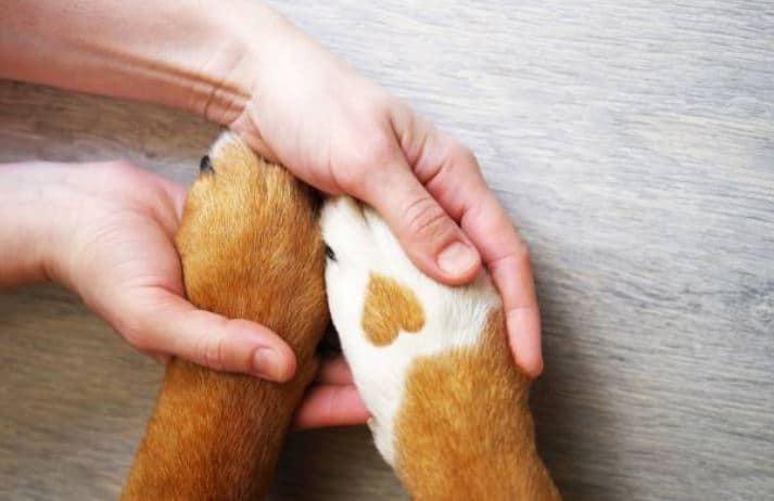 Butirrato di sodio cane gatto