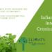 IBD Infiammazione Intestinale Cronica cane