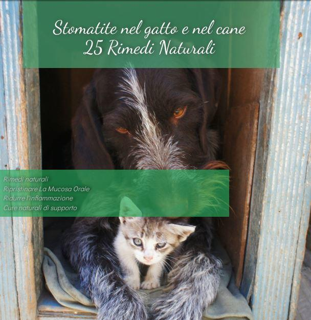 Stomatite e gengivite gatto cane Guida a 25 Rimedi Naturali