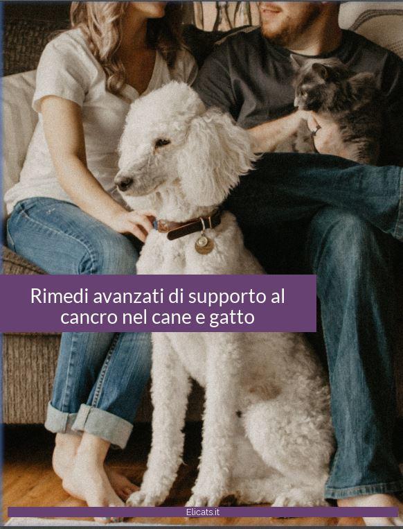 Oltre 40 rimedi naturali funzionali di supporto al cancro nel cane e gatto