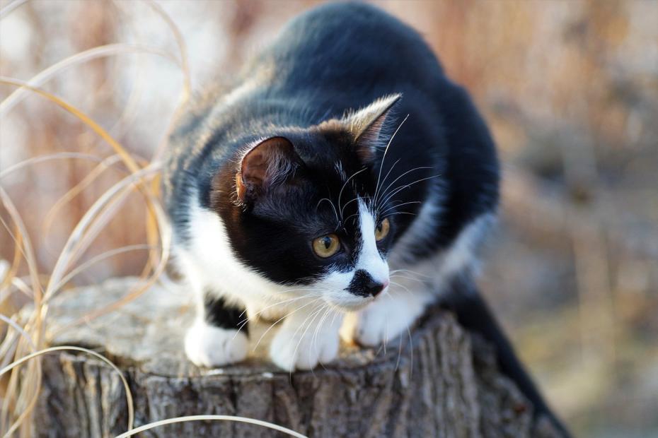 CNE Katze Lebenserwartung